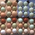 Edfords Eggs