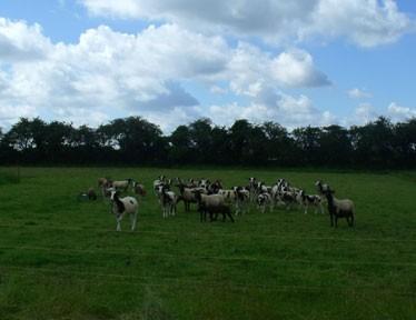 The-Edfords-Flock